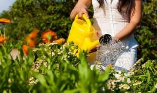 Foto mostrando que o jardim floresceu mas precisa de cuidados