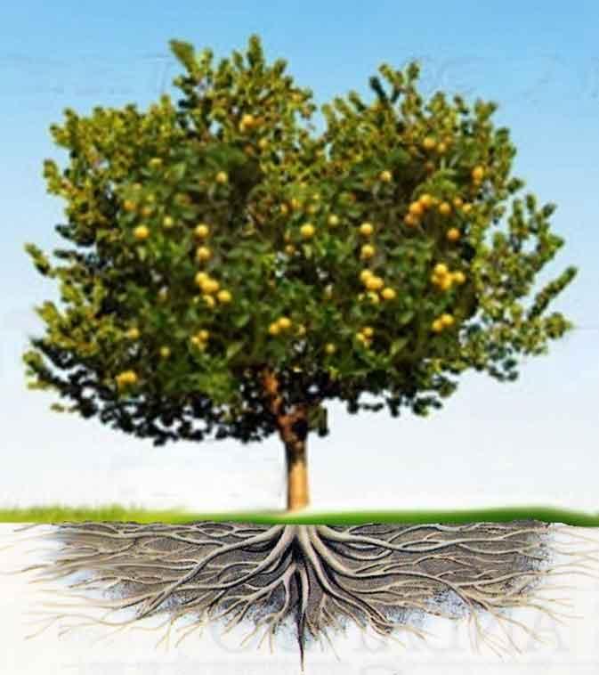 Foto de uma árvore com raízes profundas