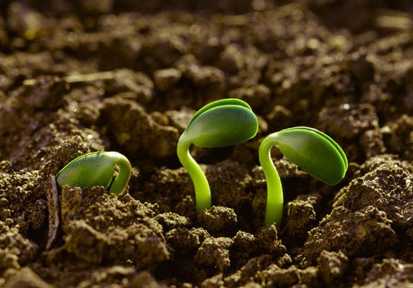 Foto mostrando uma semente crescendo no solo